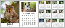 Calendar 2022. Calendar With Animals. Mammals And Birds For Each Month. Vertical Wall Calendar For 2022, Week Starts On Monday.