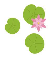 Lily Pad Leaf Flower