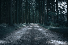 Forest Road Nature Tree Trees Woods Green Landscape