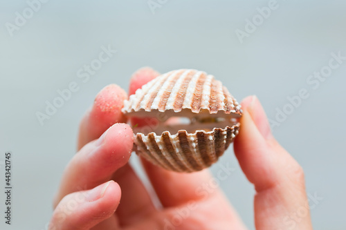 Fotografiet shell open in a delicate woman's hand