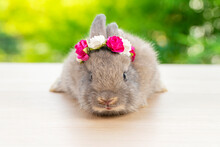 Grey Baby Bunny With White And Red Paper Roses On Own Head While Lying Down On Wood Green Bokeh Background. Newborn Rabbit With Blossom Flower On Hair While Sitting On Wooden. Easter Animal Concept.