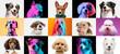 Leinwandbild Motiv Art collage made of funny dogs different breeds on multicolored studio background in neon light