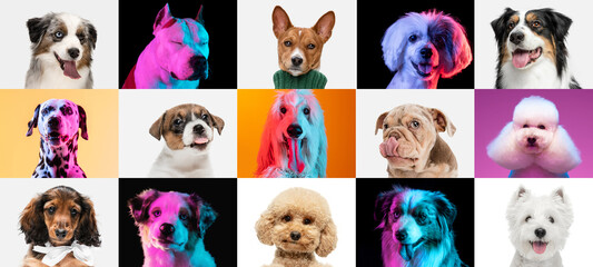 Art collage made of funny dogs different breeds on multicolored studio background in neon light