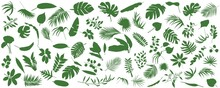 Set Of Tropical Leaves. Vector Illustration Of Various Green Foliage Isolated On White. Design Element For Poster, Menu, Flyer, Banner, Menu, Package.