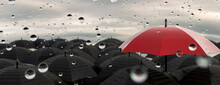 Single Red Umbrella In A Crowd Of Black Umbrellas Standing Out And Being Different On A Rain Filled Day 3d Render