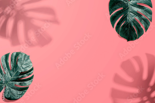 Tropical monstera leaf with shadow
