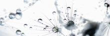 Macro Nature. Beautiful Dew Drops On Dandelion Seed Macro. Beautiful Soft Background. Water Drops On Parachutes Dandelion. Copy Space. Soft Focus On Water Droplets. Circular Shape, Abstract Background
