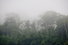 Rainforest Of The Upper Amazon In South East Ecuador