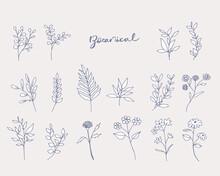 手書きの花と草木線画イラストセット Set Of Floral Elements For Graphic And Web Design. Vector Illustrations For Beauty,
