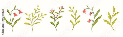 Fotografie, Obraz Vector set of floral elements design