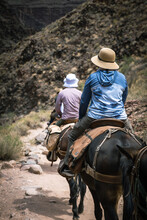 Mule Riders In Grand Canyon