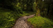 Stone Path Between The Wild Vegetation With Covered Trees And A Lot Of Ferns In A Place Called Río Cochuna, Tucumán Province, Argentina.