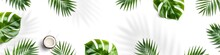Tropical Leaves, Monstera Plants And Coconut Isolated On White Background. Summer Concept, Leaf Shadows, Flat Lay, Top View