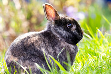 Adorable Fluffy Rabitt Bunny On Green Grass Against Blurred Background. Easter Symbol