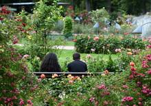 Amoureux Du  Jardin Public