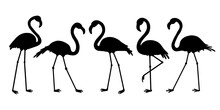 Flamingo Silhouette.