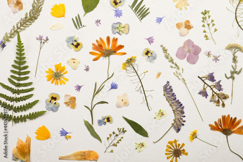 Pressed dried flowers and plants on white background, flat lay. Beautiful herbarium