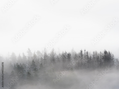 Valokuvatapetti Foggy forest in a gloomy landscape. Trees in heavy fog