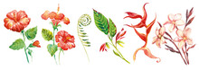 Tropical Watercolor Flowers And Leaves