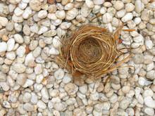Bird Nest On Nature Background.