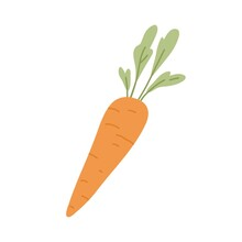 Carrot With Tops. Orange Tuber And Leaf Of Fresh Raw Root Vegetable. Sweet Vegetarian Food. Colored Flat Vector Illustration Of Crunchy Veggie Isolated On White Background