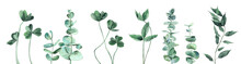 Watercolor Leaves Set In Cool Shades. Clover, Eucalyptus, Foliage. Watercolour Illustration Isolated On White Background.
