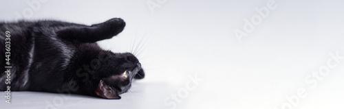 Foto Black cat