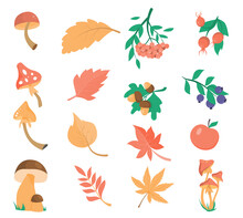 A Set Of Autumn Leaves, Plants And Mushrooms. Isolated Design Elements On A White Background. The Fruits Of Various Trees, Mountain Ash, Acorns, Rose Hips And Currants. Mushrooms And Foliage.