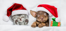 Cute Kitten And Dachshund Puppy Wearing Santa Hats Sleep Together  With Gift Box Under A White Blanket On A Bed At Home. Top Down View
