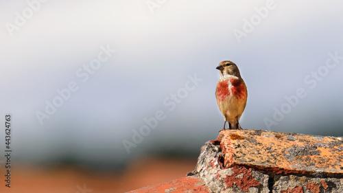 Fotografía Pajaro pequeños en el tejado, observando atentamente