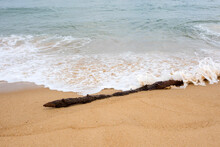 Piece Of Driftwood By The Ocean