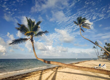 Two Curved Palm Trees On The Shore Of The Caribbean Sea. Dominican Republic Beach In Punta Cana. Tropical Landscape. The Concept Of Exotic Vacation, Travel And Tourism.