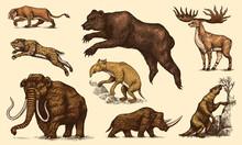 Mammoth Or Extinct Elephant, Woolly Rhinoceros Cave Bear Lion. Panthera Saber Toothed Tiger, Irish Elk Or Deer, Ground Sloth, Megatheriidae. Vintage Animal. Retro Mammals. Hand Drawn Engraved Sketch.