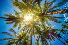 Low Angle View Of Coconut Palm Trees On Blue Sky With Sun Shine In The Day, Summer Concept