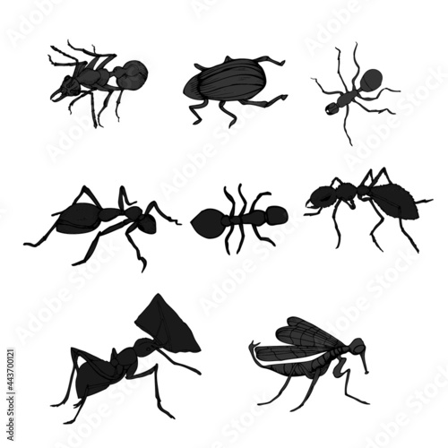 Canvastavla vector, isolated, set of insects