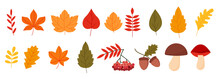Colorful Set With Autumn Elements Flat Style