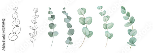 Photo Set of differents eucalyptus branches on white background