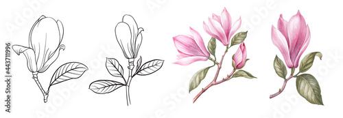 Fotografija Set of differents magnolia on white background
