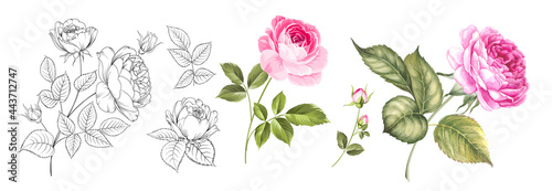 Photo Set of differents roses on white background