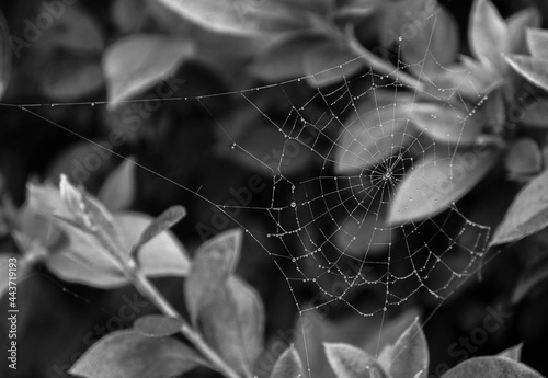 Canvastavla spider web with dew drops and leaves
