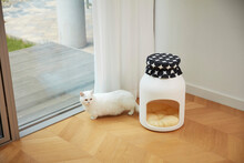 고양이의 하루, Cat's Life