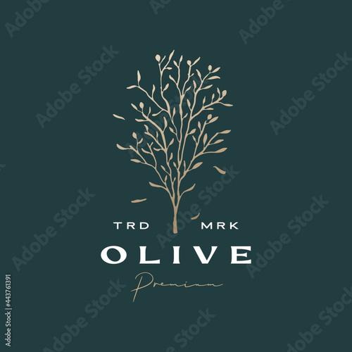 Fotografie, Obraz olive tree sophisticated aesthetic logo vector icon illustration