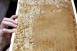 Świeży lepki miód na ramce wyciągnięty prosto z ula
