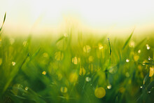 Water Drops On Blade Of Grass (Shallow Dof)