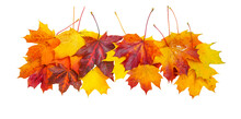 Creative Autumn Composition Border - Group Of Natural Maple Leaves Of Yellow, Orange, Red, Burgundy Colors  Isolated On White Background.