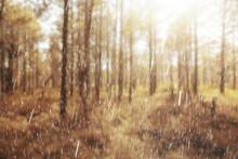 Landscape Autumn Rain Drops Splashes In The Forest Background, October Weather Landscape Beautiful Park