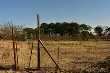An Old Rusty Farm Gate And Droopy Fence With Eucalyptus Trees And Blue Sky In The Background