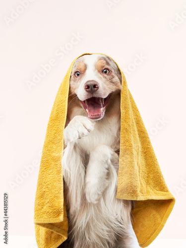 wet dog after shower Fototapet