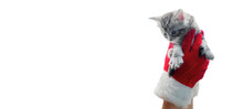Christmas Kitten In Santa Claus Hands In Red Gloves. Portrait Striped Maine Coon Cat Banner With Copy Space. Happy New Year Post Card