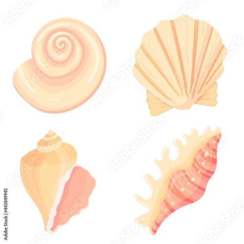 Fotografija Set of conch flat cartoon vector Illustration